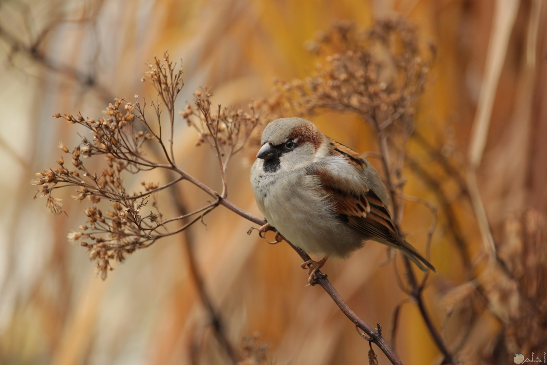 صورة مميزة جدا لطائر رمادي جميل واقف علي غصن شجرة