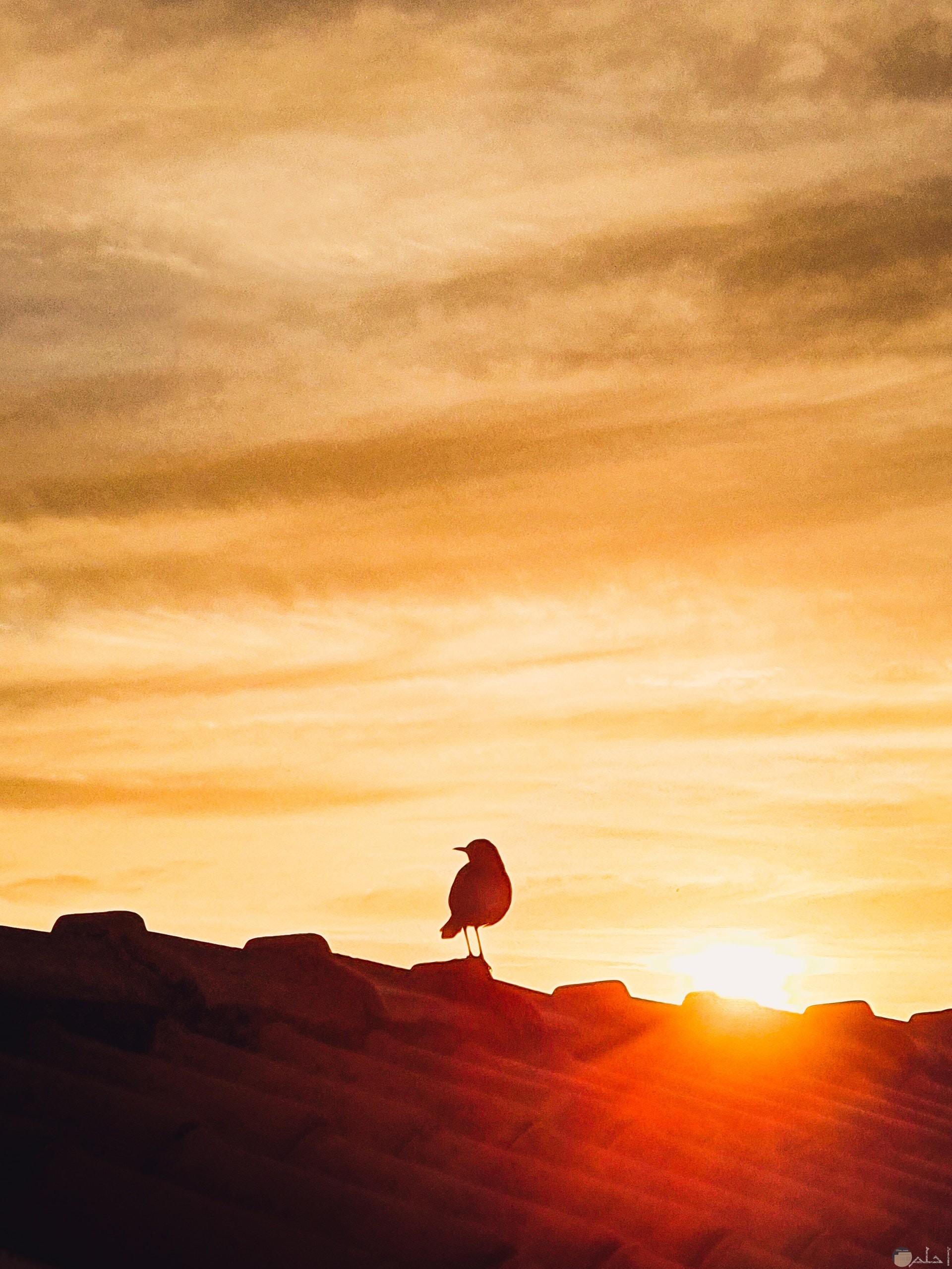 صورة مميزة جدا لطائر واقف فوق السطح وقت الغروب