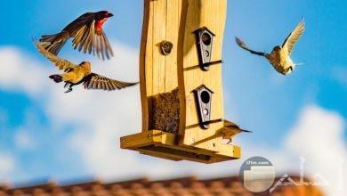 صورة مميزة جدا لمجموعة من الطيور تتجه لبيت طيور أصفر جميل