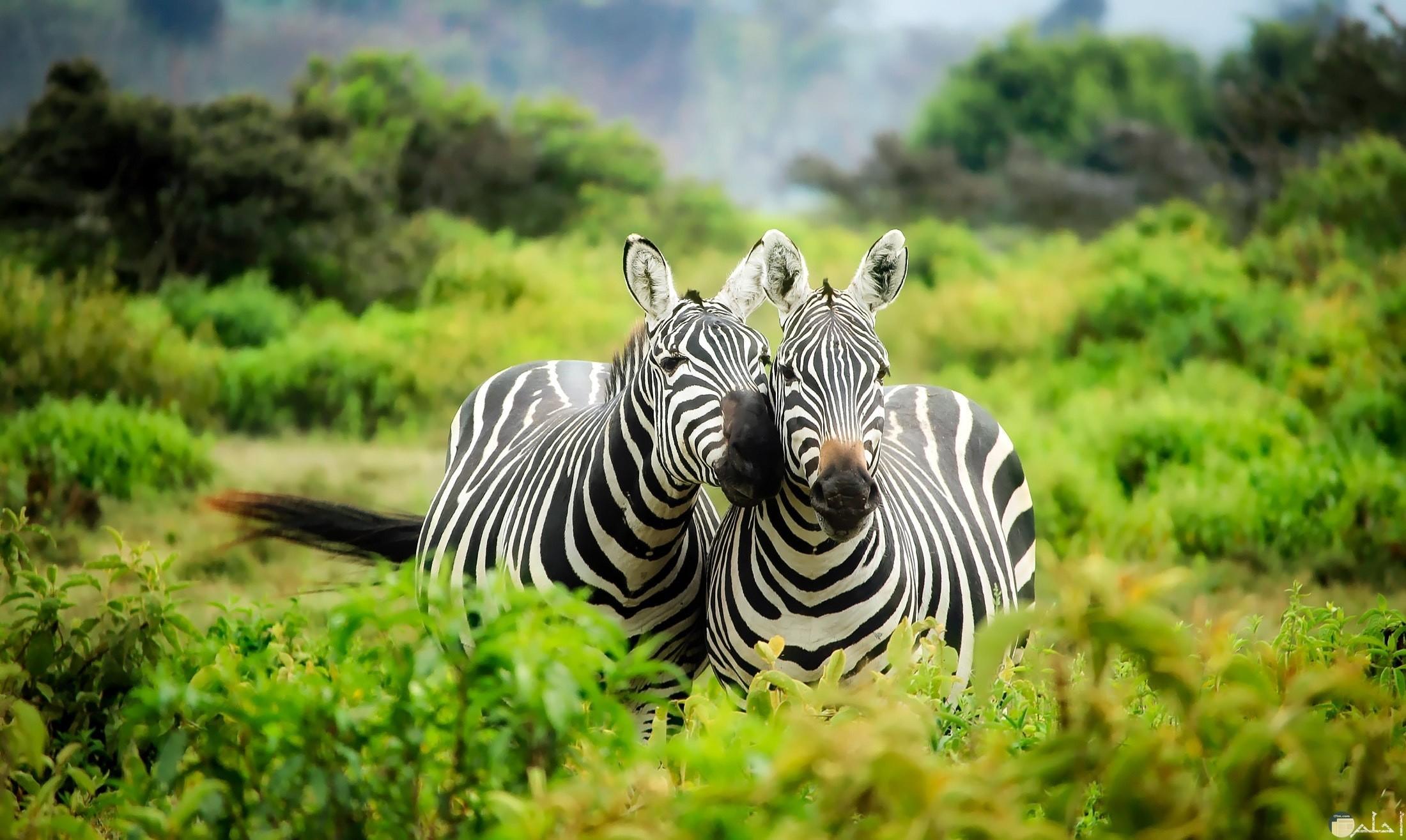 صور حيوانات HD