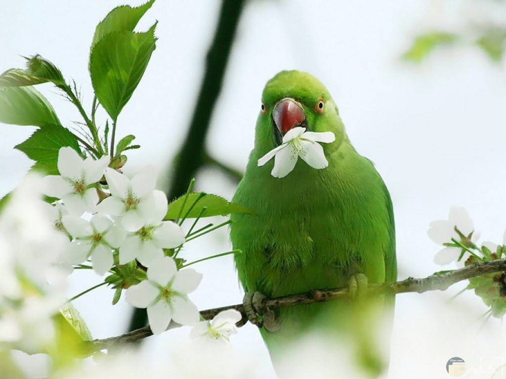 صور طيور hd