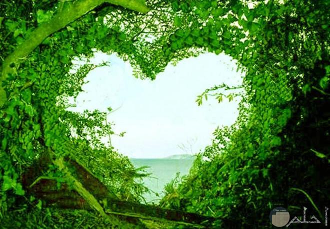 قلب أخضر من أوراق الشجر