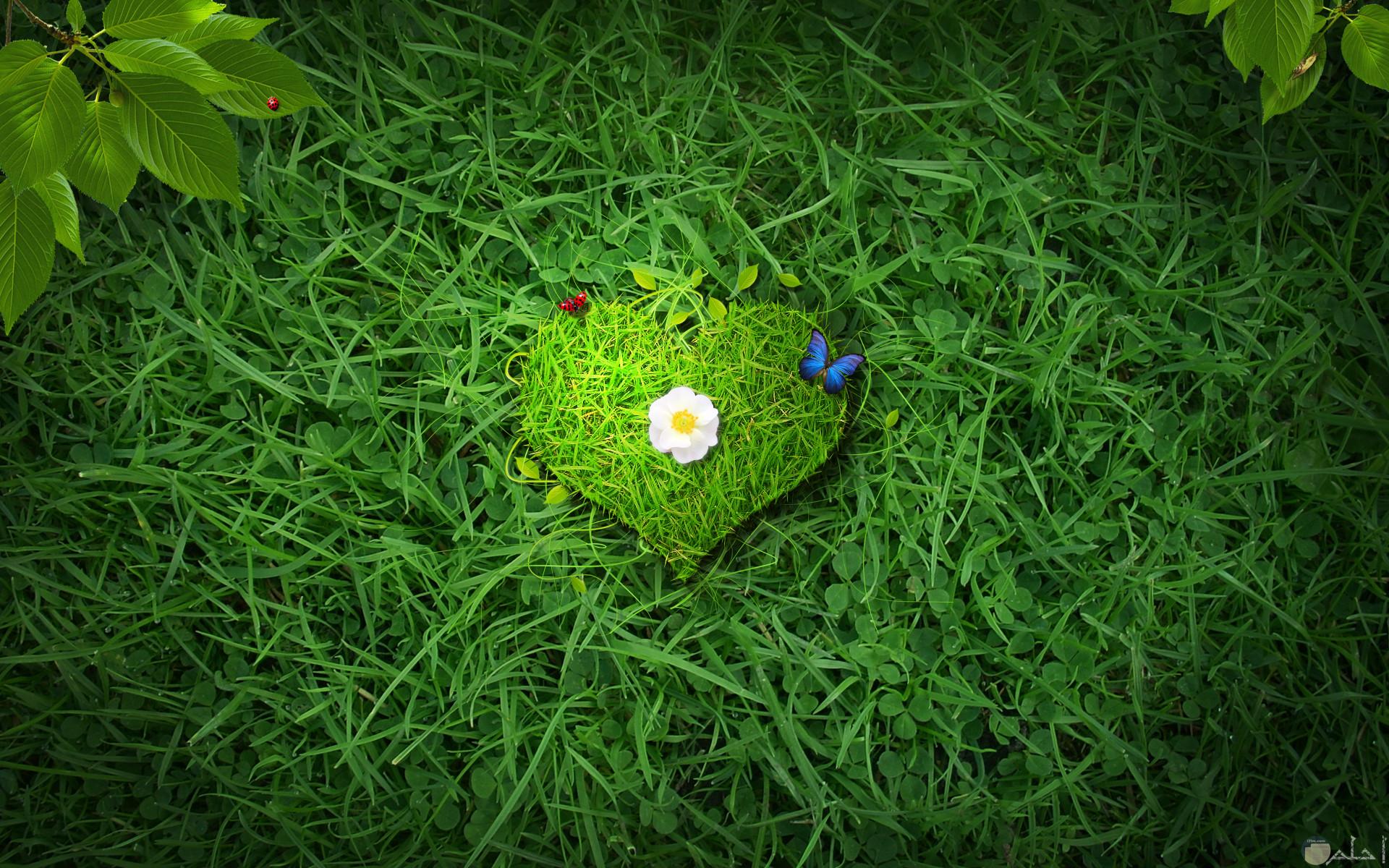 صورة جميلة لقلب اخضر من حشائش الأرض