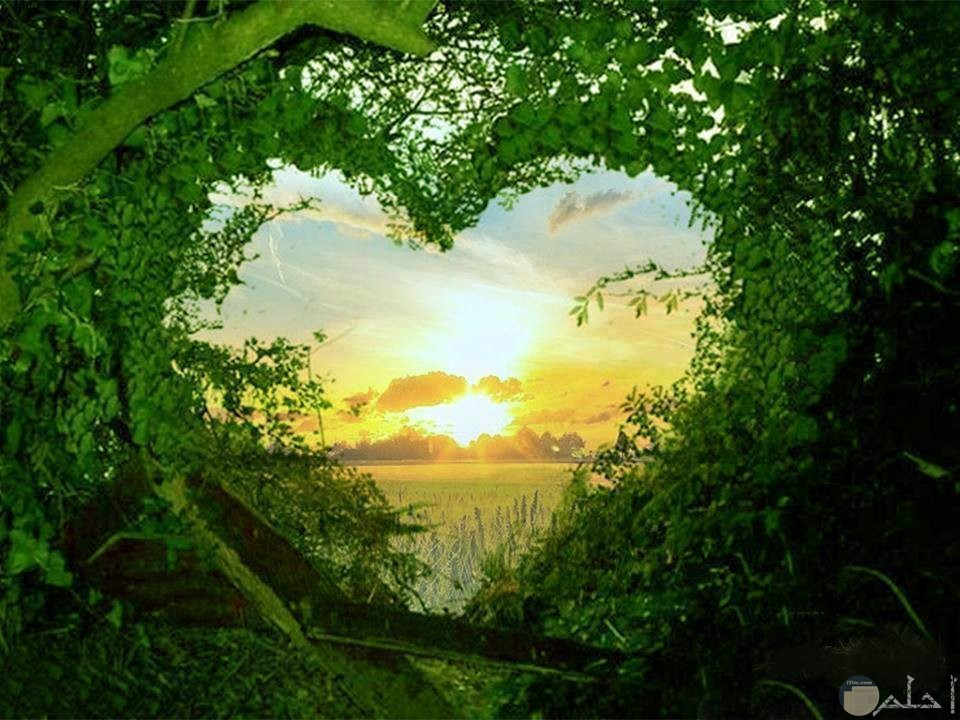قلب اخضر يطل علي منظر مدهش
