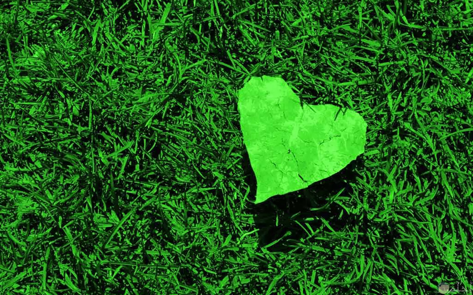 قلب باللون الاخضر الجميل من ورق الشجر