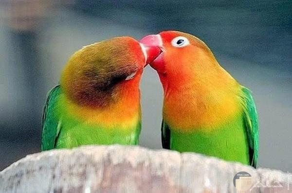 صور طيور مضحكة 4