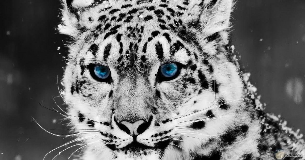 صور حيوانات 1