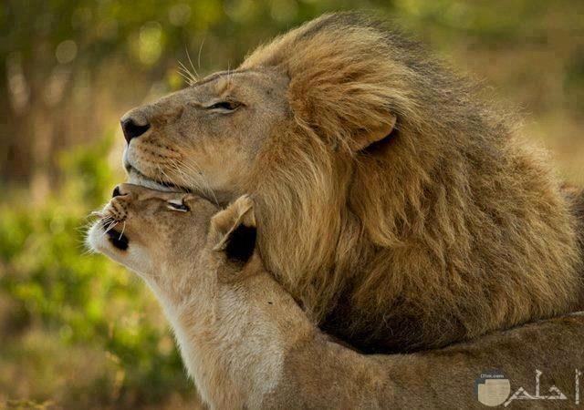 صور حيوانات HD رومانسية