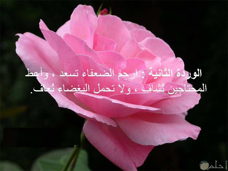 حكمة ونصيحة جميلة علي وردة