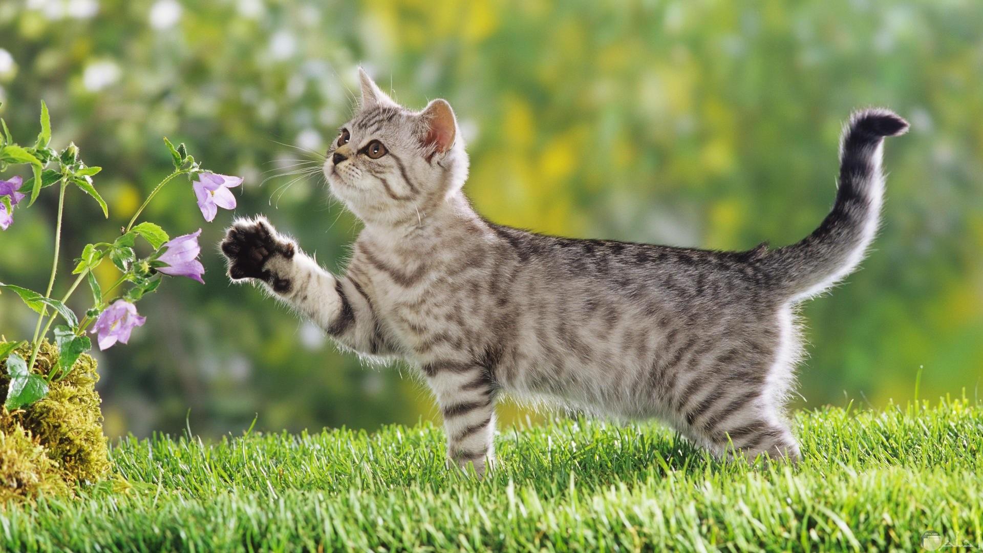 صور قطة جميلة