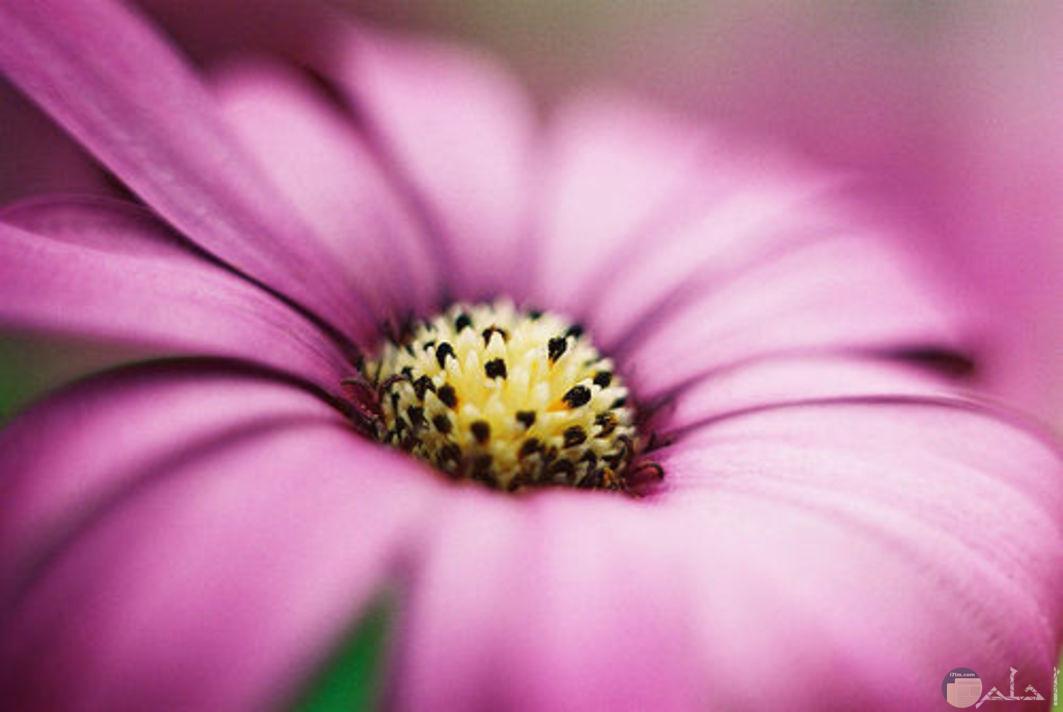 أجمل الورود والأزهار