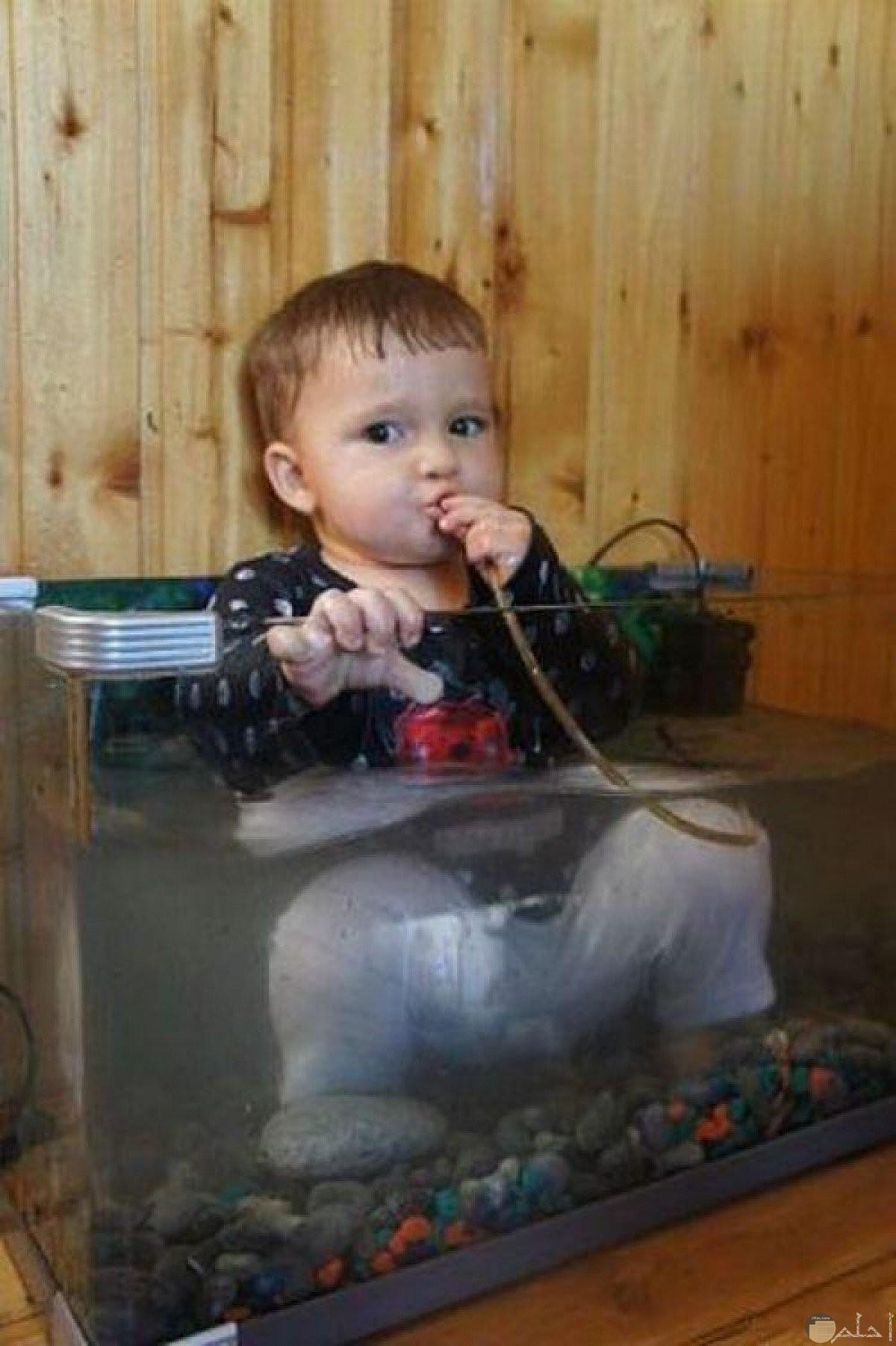 بيبي داخل حوض السمك