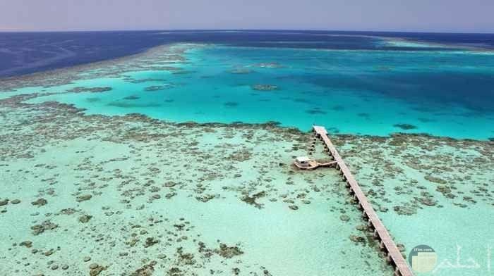 جزيرة سنقنيب السودانية