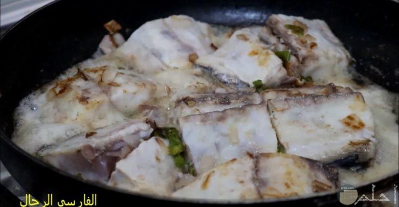سمك المكش الجيزاني