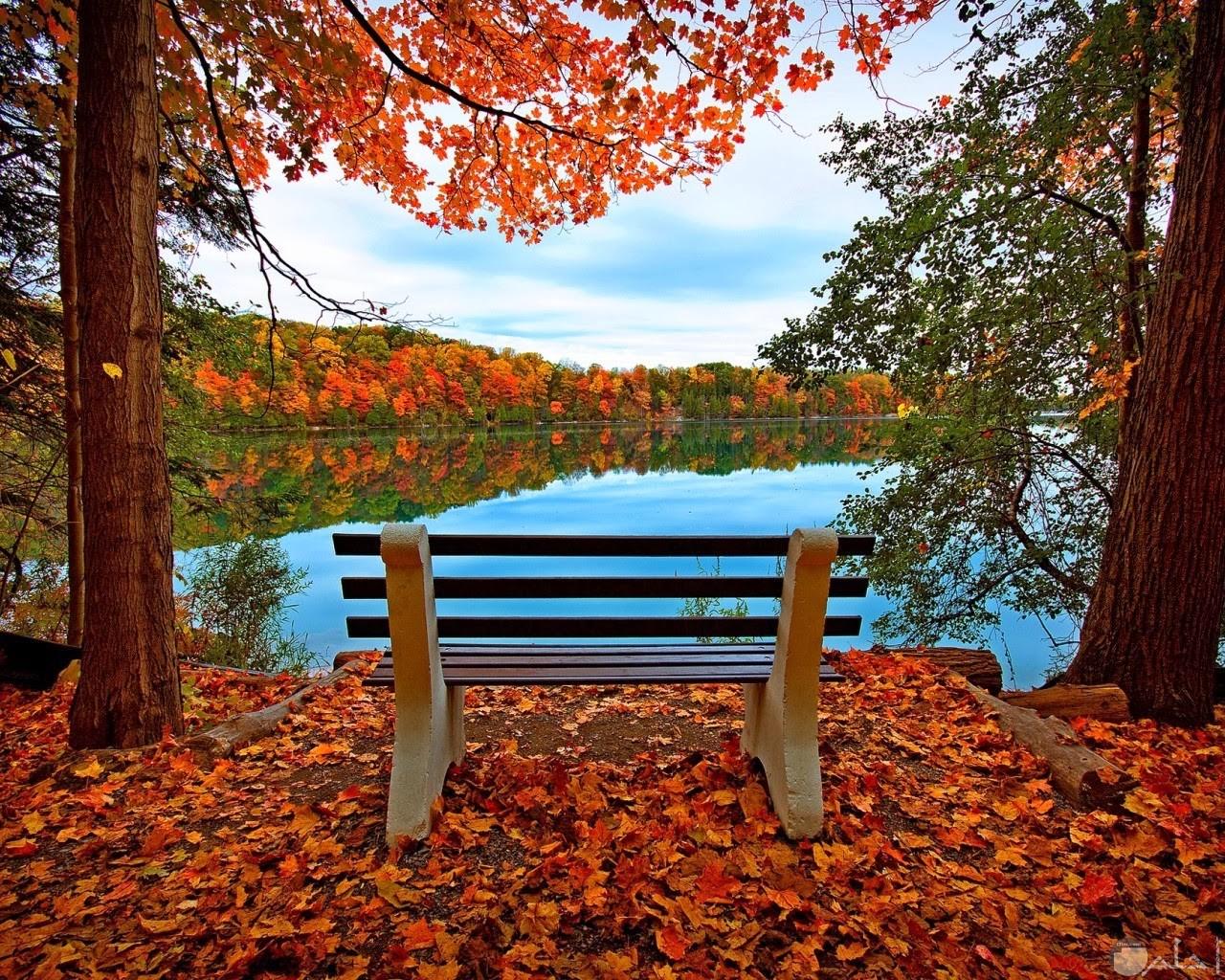 جلسة رائعة وسط منظر لتداخل أشجار ملونة