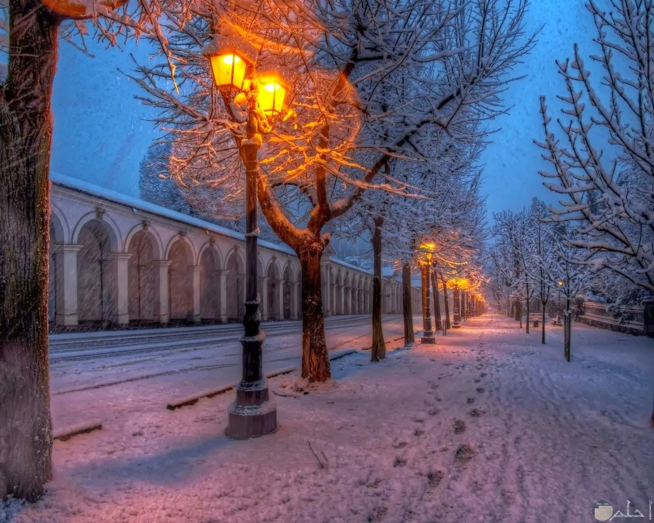 الثلوج تغطي الاشجار والشارع بمنظر رائع