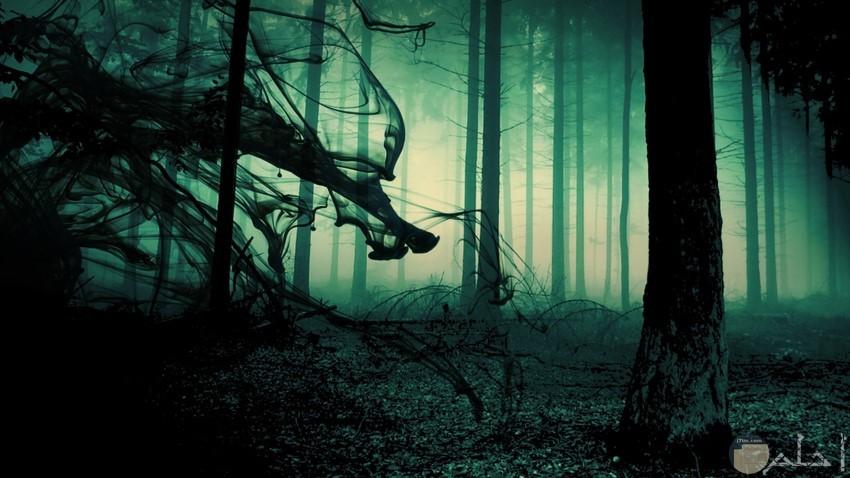 صورة مخيفة من الغابة