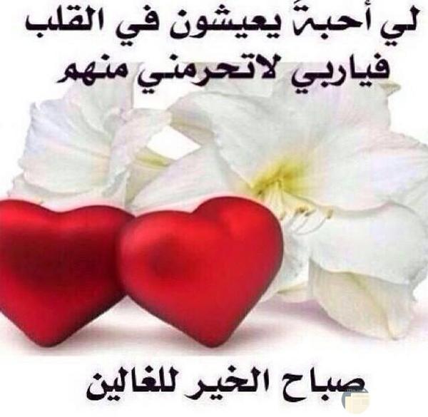 قلبيين وورود بيضاء وعبارة صباح الخير للغالين