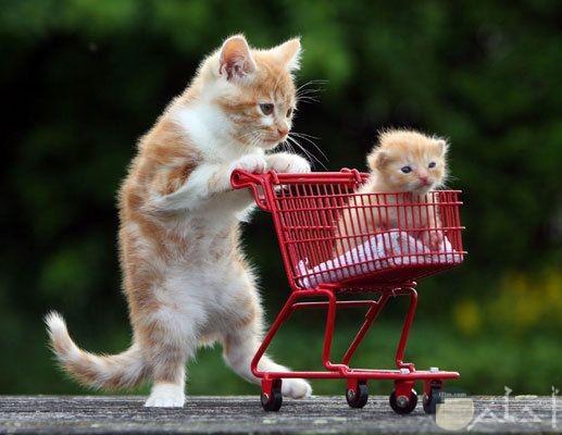 صورة مضحكة لقطة تقود قطتها الصغيرة ببسكلتة خاصة بها مضحكة وجميلة