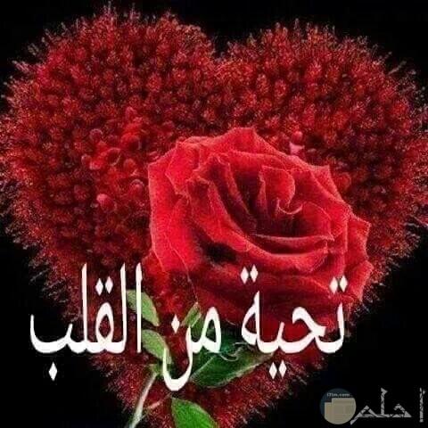 صورة جميلة بها قلب احمر ووردة وعبارة تحية من القلب