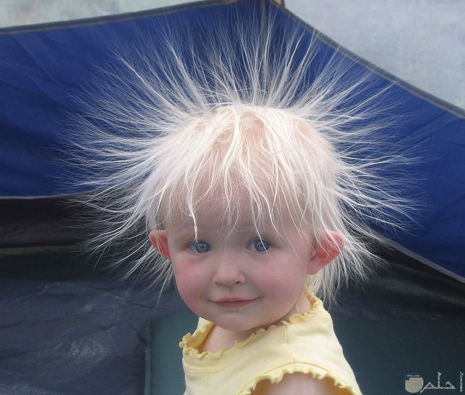 صورة مضحكة جدا لفتاه صغيرة شعرها يطير بشكل مضحك
