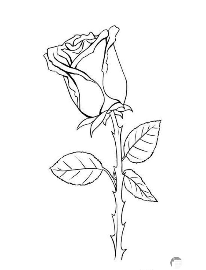 صور أبيض وأسود رسم ورد وفراشات
