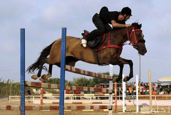 صورة فارس وحصان وحواجز