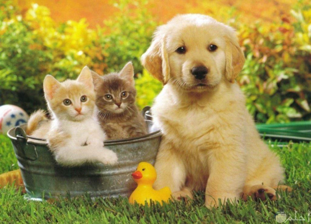كلب مع قطط جميلة