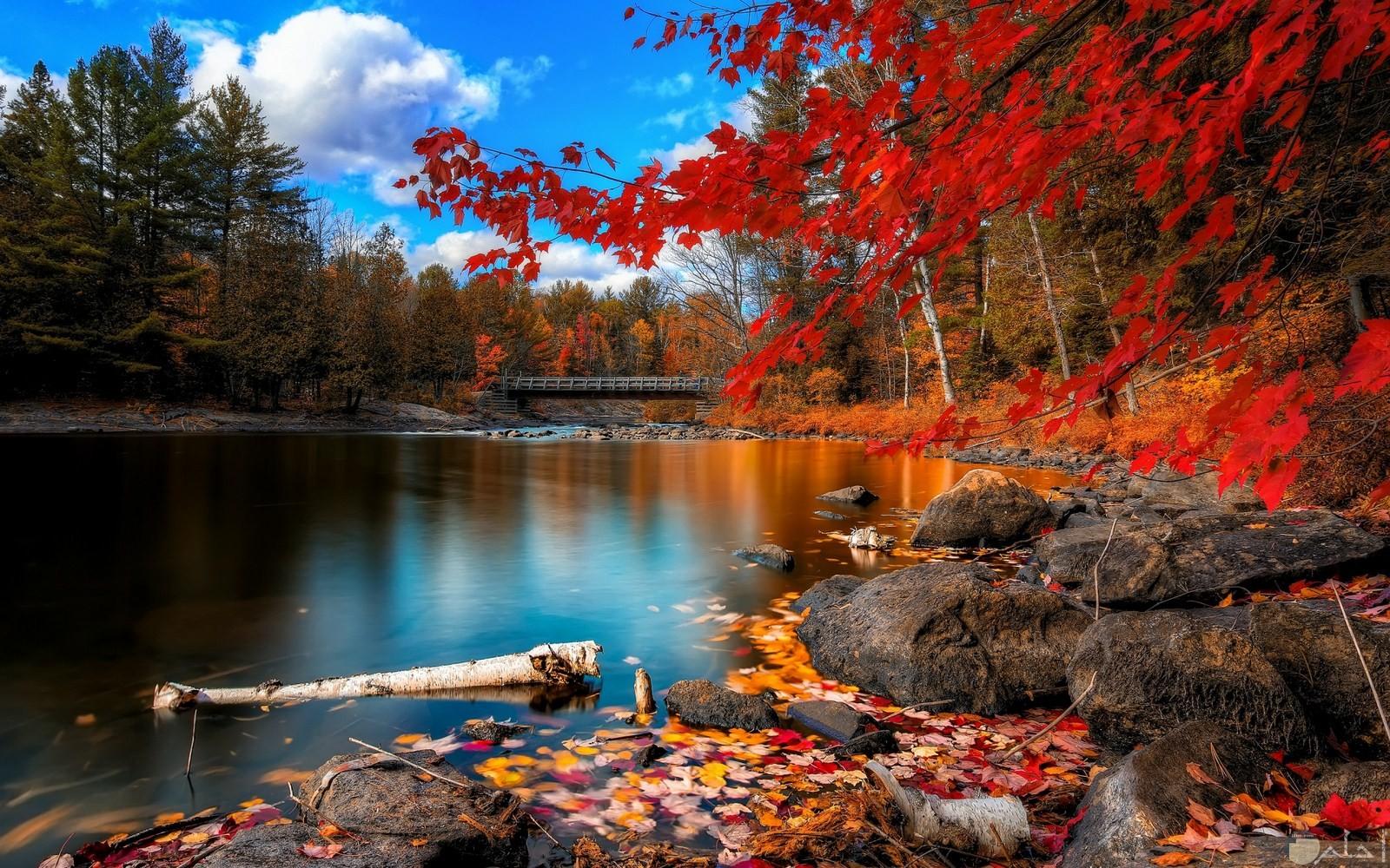أجمل مناظر الأنهار و المحاطة بالأشجار.