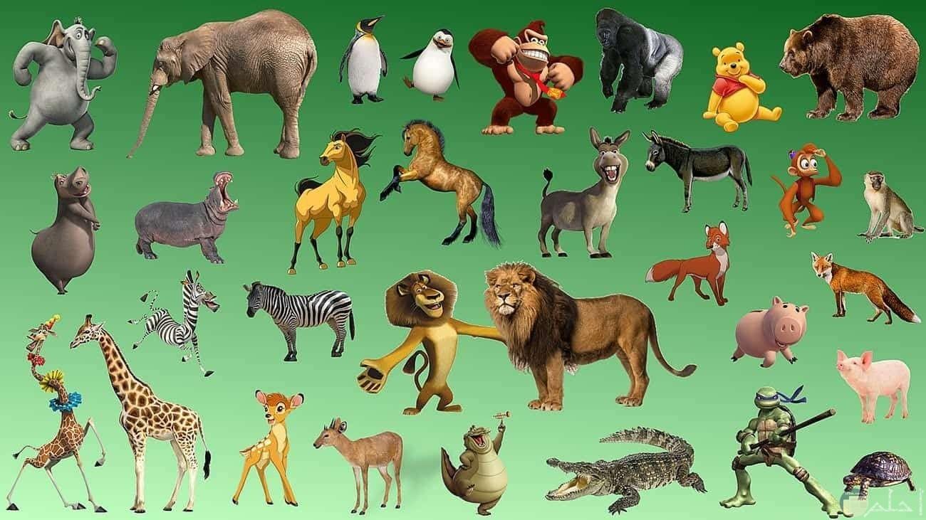 اشكال حيوانات الغابة للاطفال.