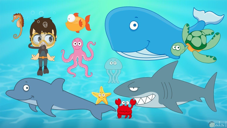 اشكال الحيوانات البحرية للاطفال.