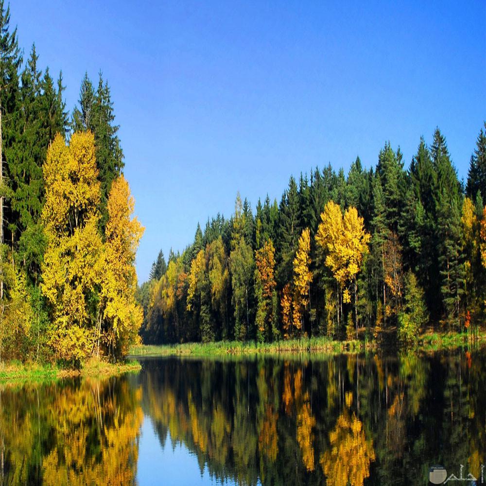 بحر يحيطة اشجار من الجهاتين