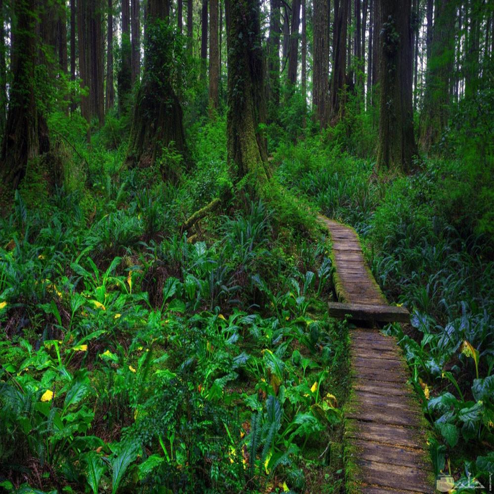 غابات مليئة بالاشجار الطبيعية