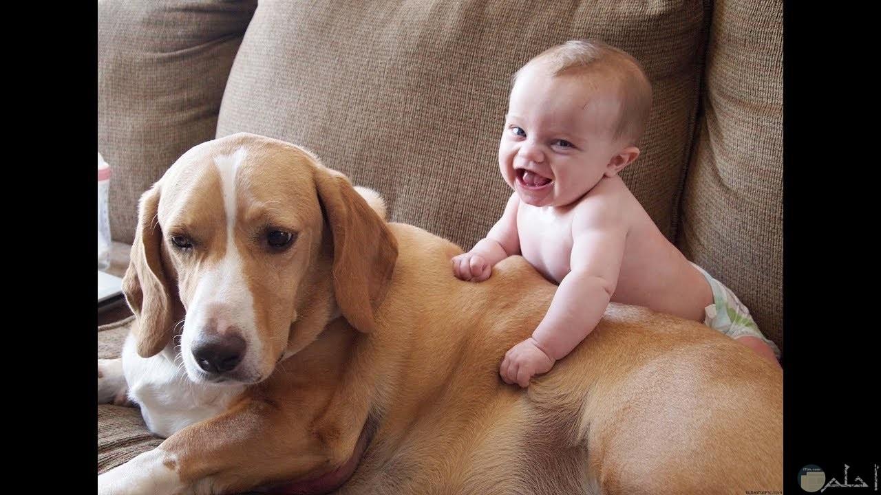 طفل صغير بيلعب بجوار كلب كبير.