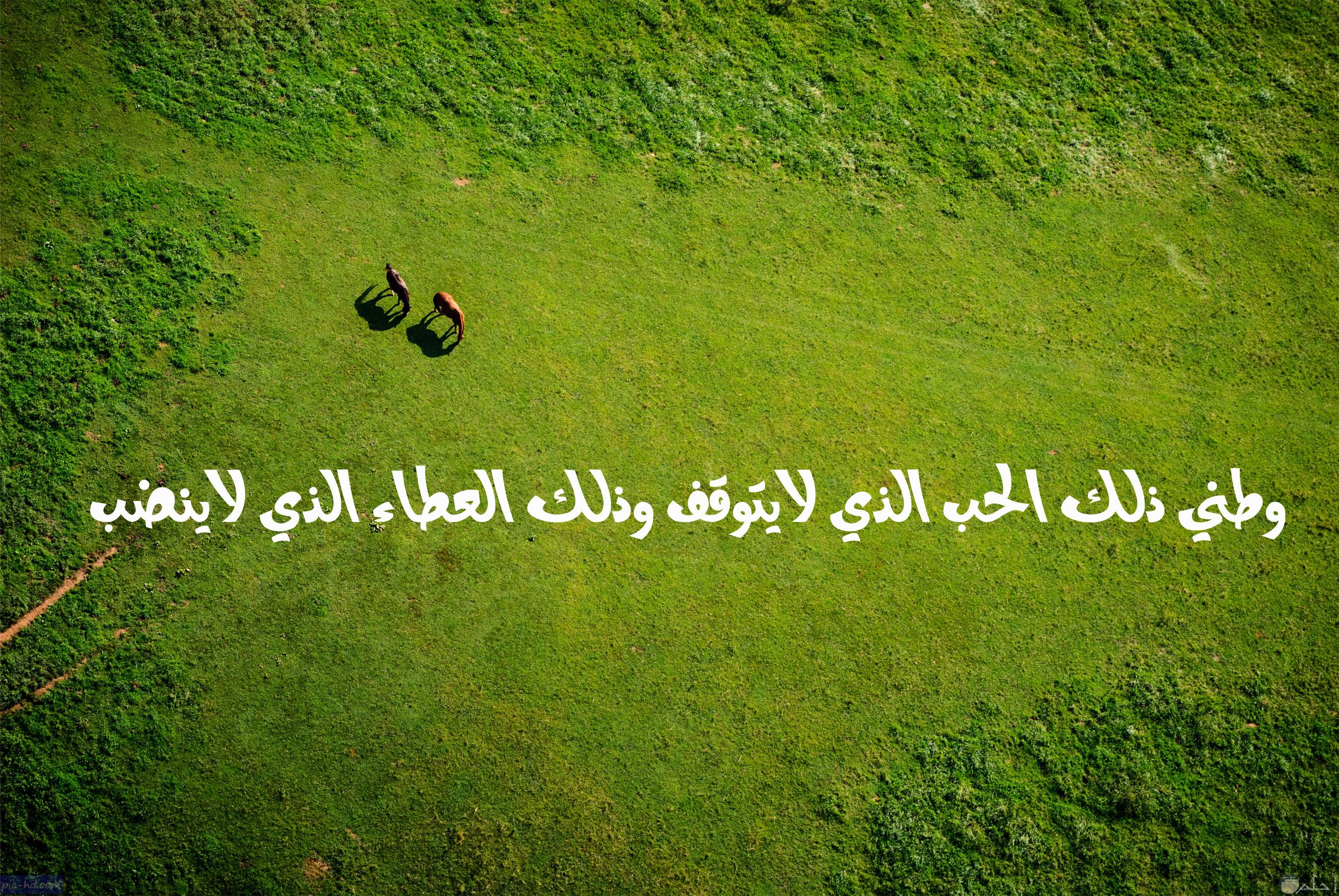 وطني ذلك الحب الذي لا يتوقف و ذلك العطاء الذي لا ينضب.