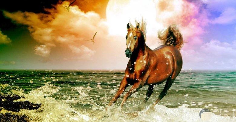 أجمل صور الخيول و الأحصنة الطبيعية الجميلة.