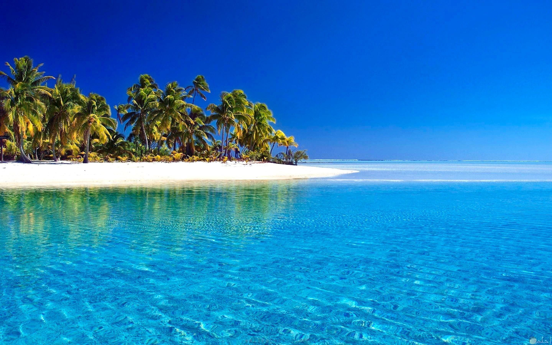 صورة بحر جميلة مع الرمال و النخيل و أشجار الشواطئ.