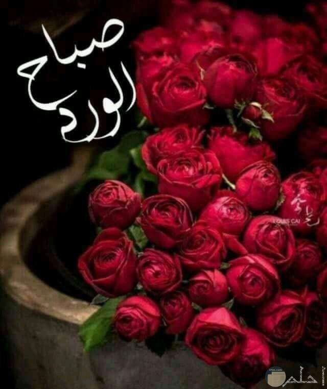 صورة صباح الورد للأدمن