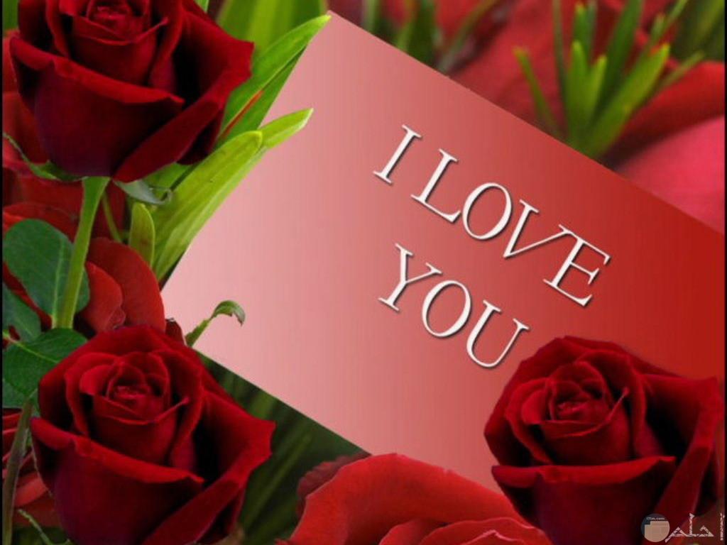 كارت وورد احمر ورسالة حب