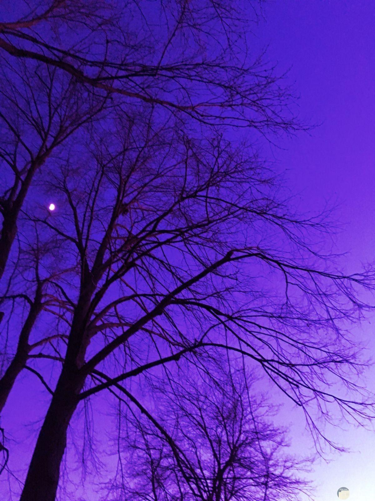 شجرة و خلفية سماء باللون البنفسجي.