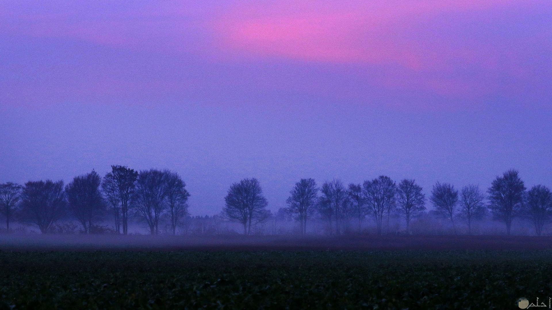 سماء باللون البنفسجي مع منظر جميل للأشجار بالبنفسجي.