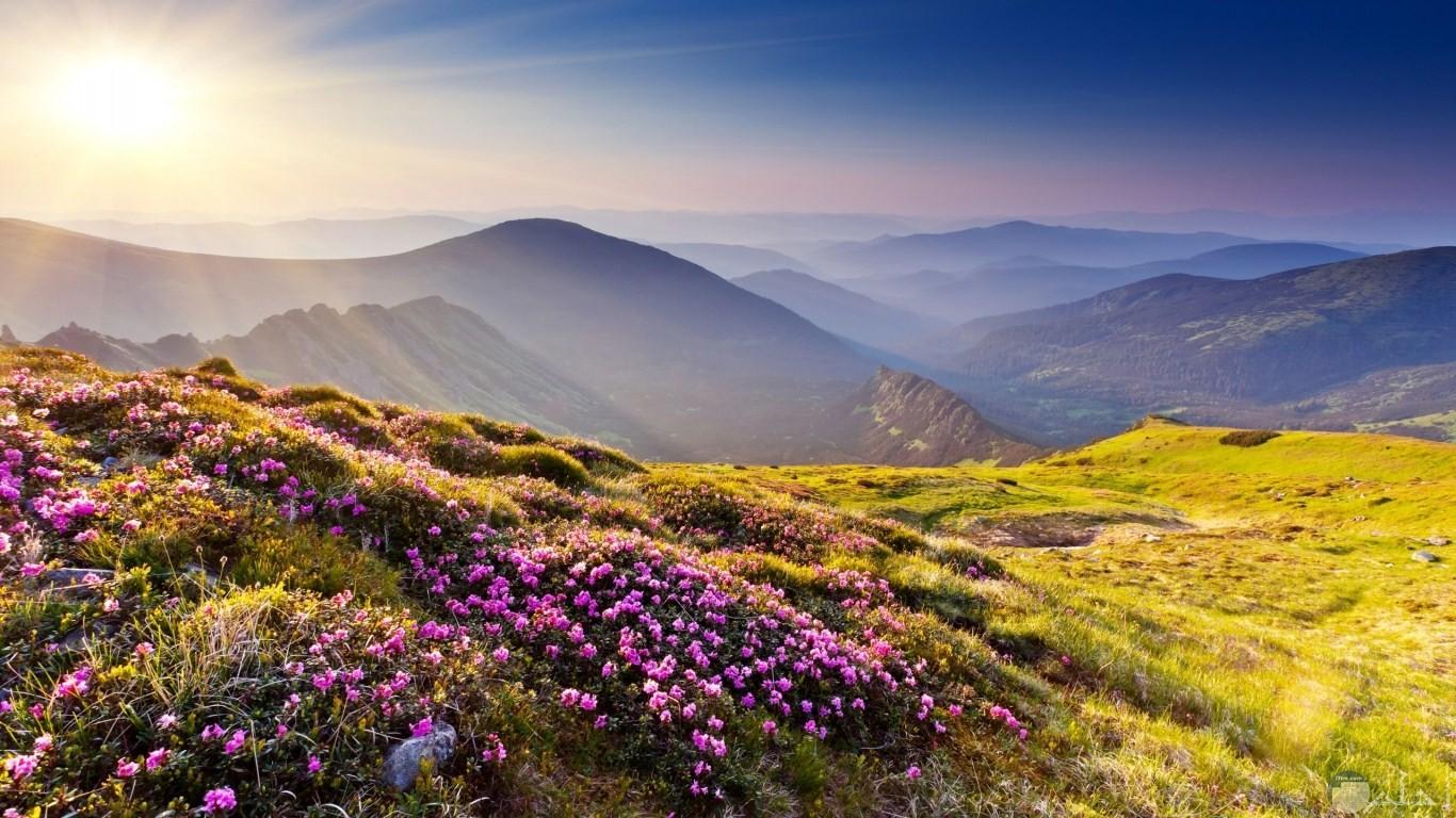 جمال الجبال و الأعشاب البرية و الأزهار الجبلية الجميلة.