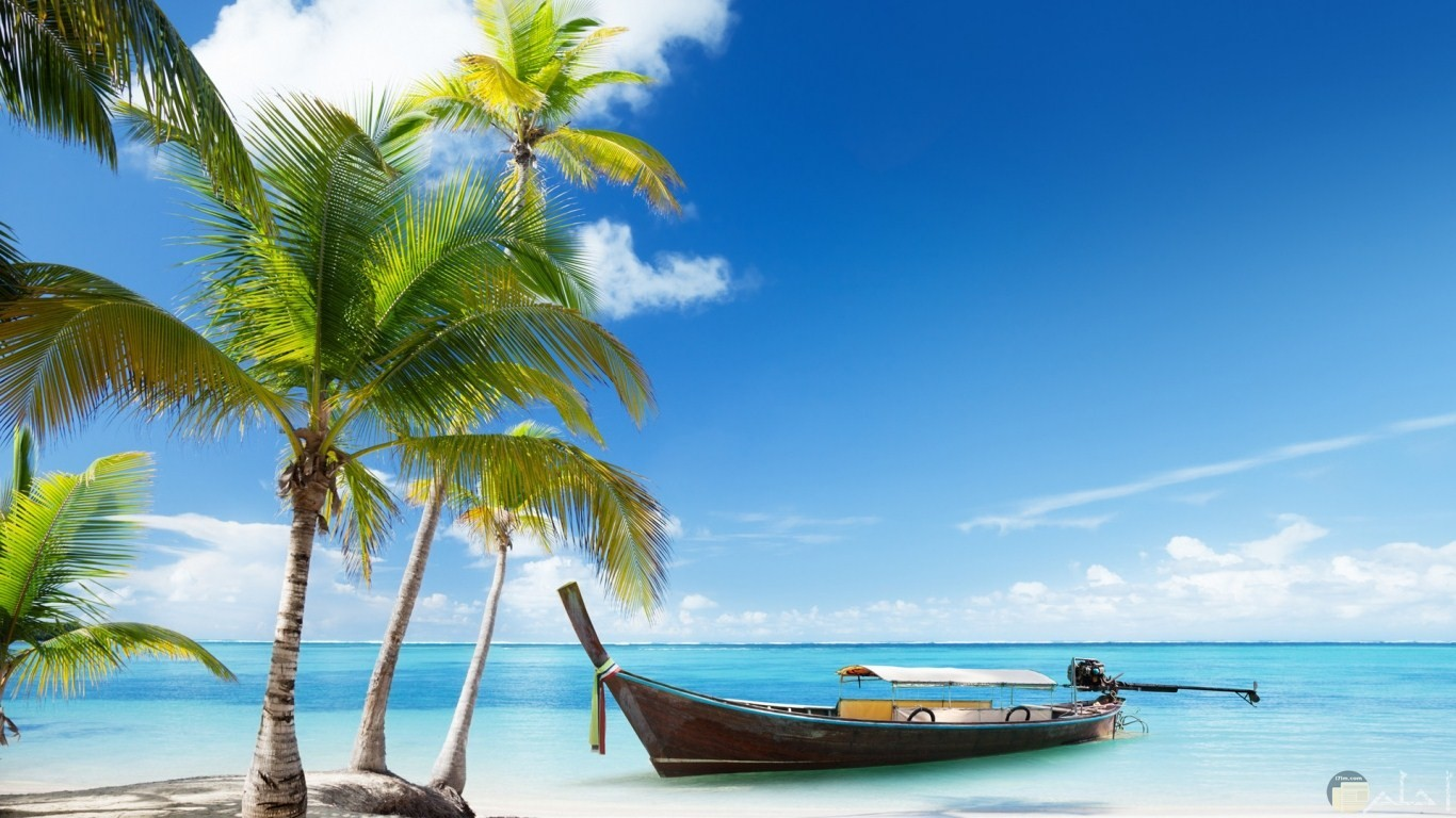 قارب قريب من الشاطئ الرملي الجميل في وجود نخل جميل الشكل.