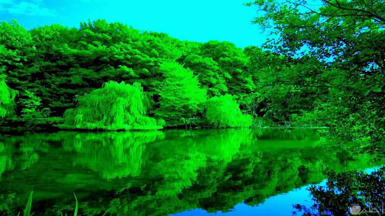نهر كبير و واسع مع طبيعة خضراء على الضفة.