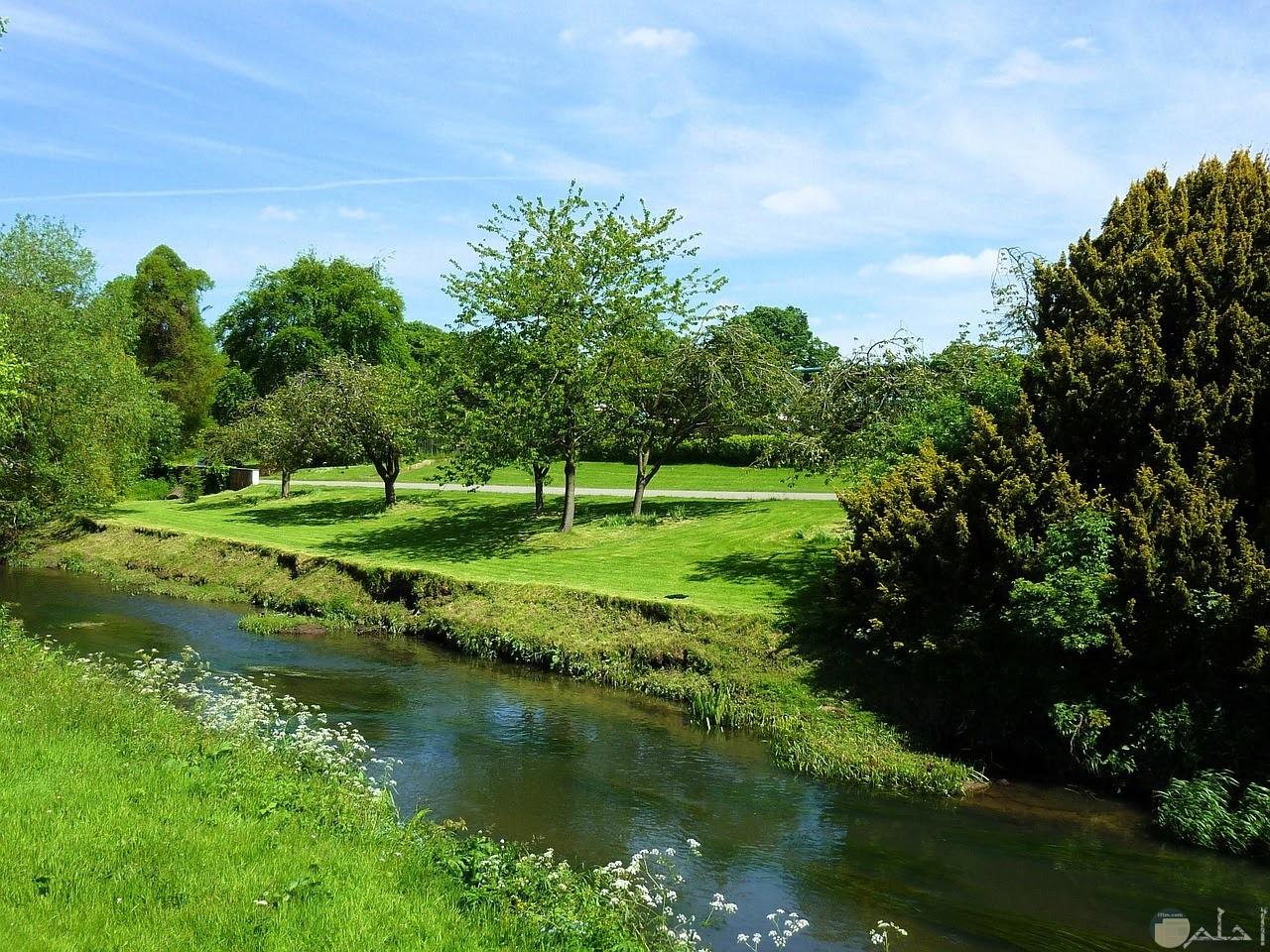 جدول مائي صغير وسط المساحات الخضراء الخلابة الجمال.