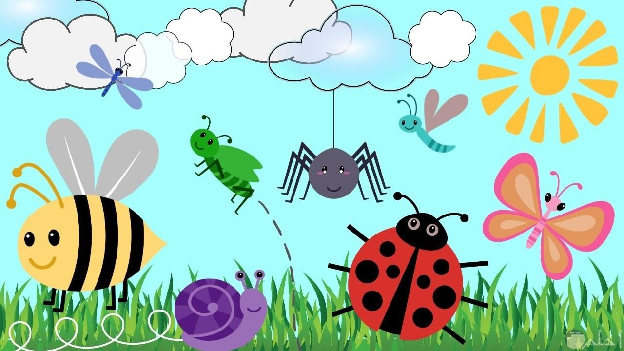 اشكال الحشرات للاطفال.