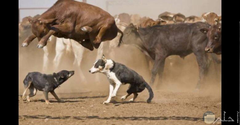 الخوف من الكلب حتى الطيران.