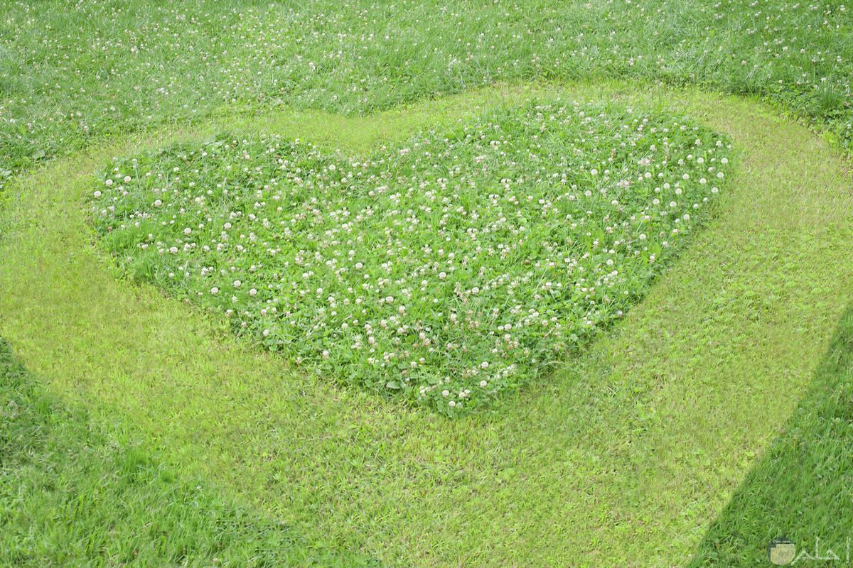 قلب جميل باللون الاخضر مرسوم من الزهور والحشائش