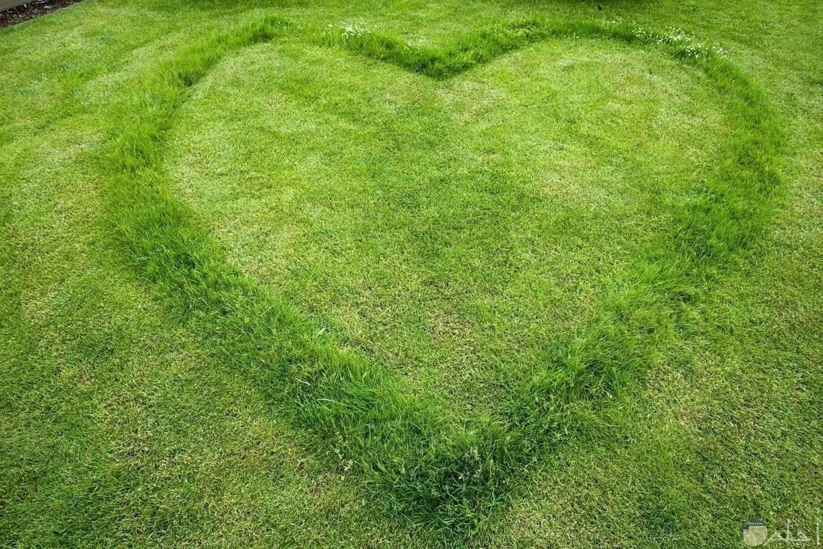 إبداع في رسم قلب اخضر رائع