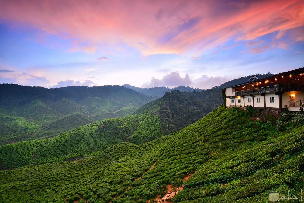 مرتفعات-كاميرون في ماليزيا